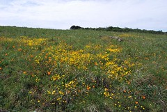 10a. Serpentine Grasslands Photo