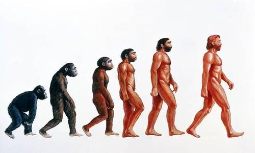 théorie évolution