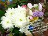 4056831920_d9444e8c90_t