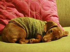 sleepy puppy photo by flint knits
