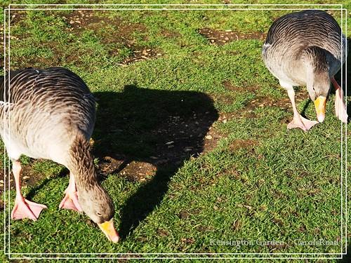 2009-11-07 Kensington Garden 023