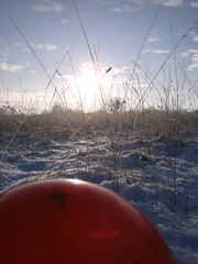 Pics/Art/Red Ball/PICT0719.JPG