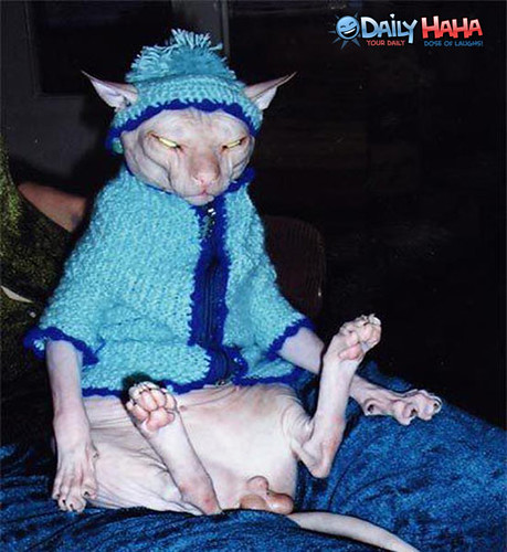 ugliest_cat_of_all_time