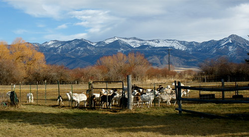 Goats & Mountains