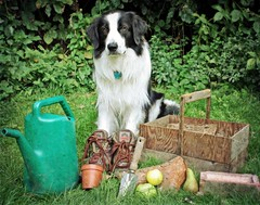 The Working Dog! ~ For Karen :) photo by meg price
