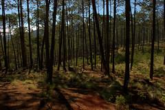 reforestacion_23