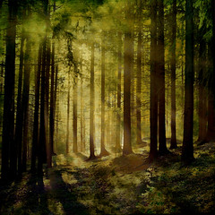 Hagrid´s forest photo by regina_austria