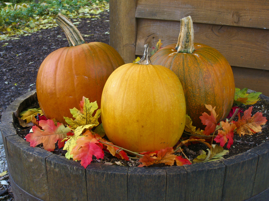 Door County Pumpkins