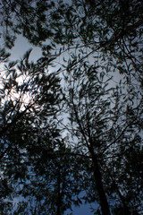 reforestacion_09