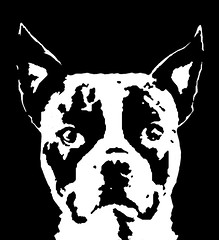 Boston Terrier Black & White Stencil Dog Art Print photo by Pupaya