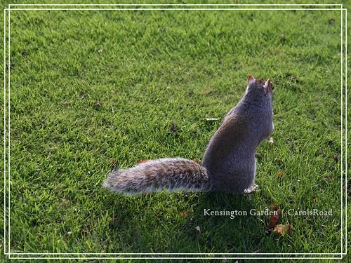 2009-11-07 Kensington Garden 055