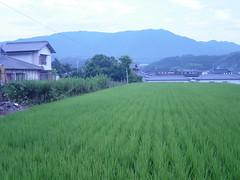 >My HOUSE!