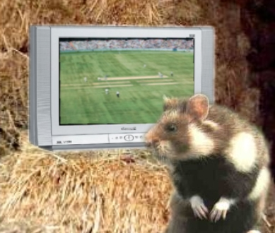 The Cricket Hamster