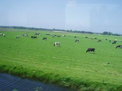 pemandangan dari kereta
