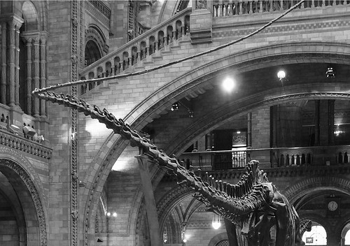 La cola del diplodocus