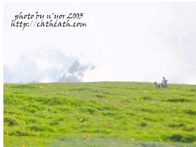 cathcath jungfraujoch152