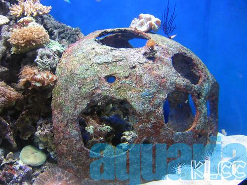 aquaria6