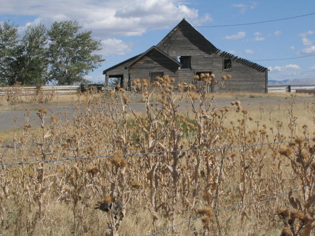 Empty Ranch Building and Dead Thistles