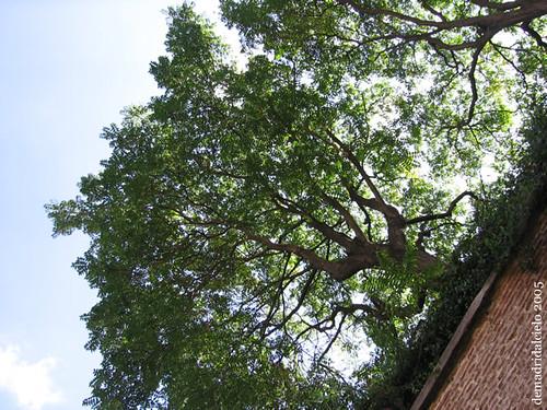 Un árbol que desafía la gravedad