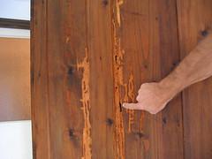 armoire worm damage