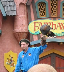 The Art of Falconry show