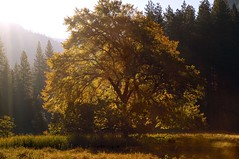 Autumn Morning in the Valley