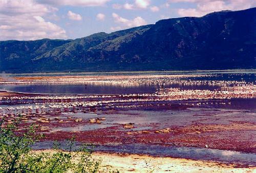kenya_flamingos