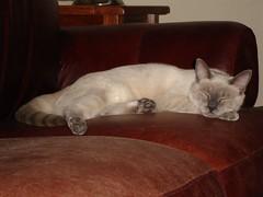 Sleepy Sagwa