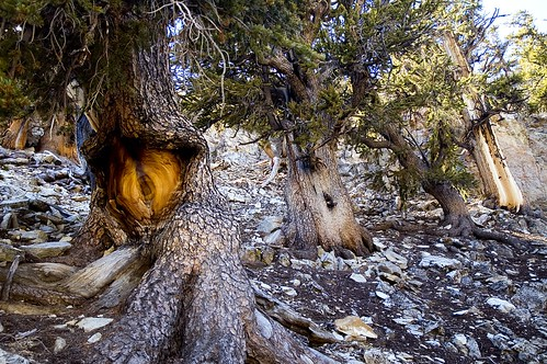 The Eye in the Ancient Forest