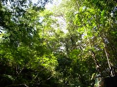 Dapitan Forest