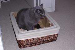 Artemis in a basket