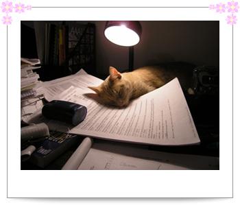 paper伴我眠