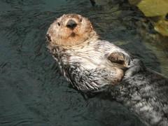 lisboa: otter