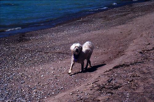 Sammi Beach