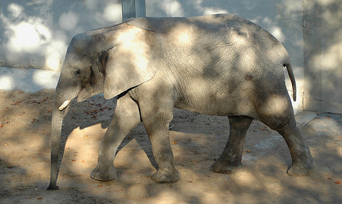 elefant // elephant