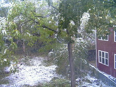 Snow Picture #2, October 29 2005