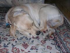 Rocky sleeping like a donut
