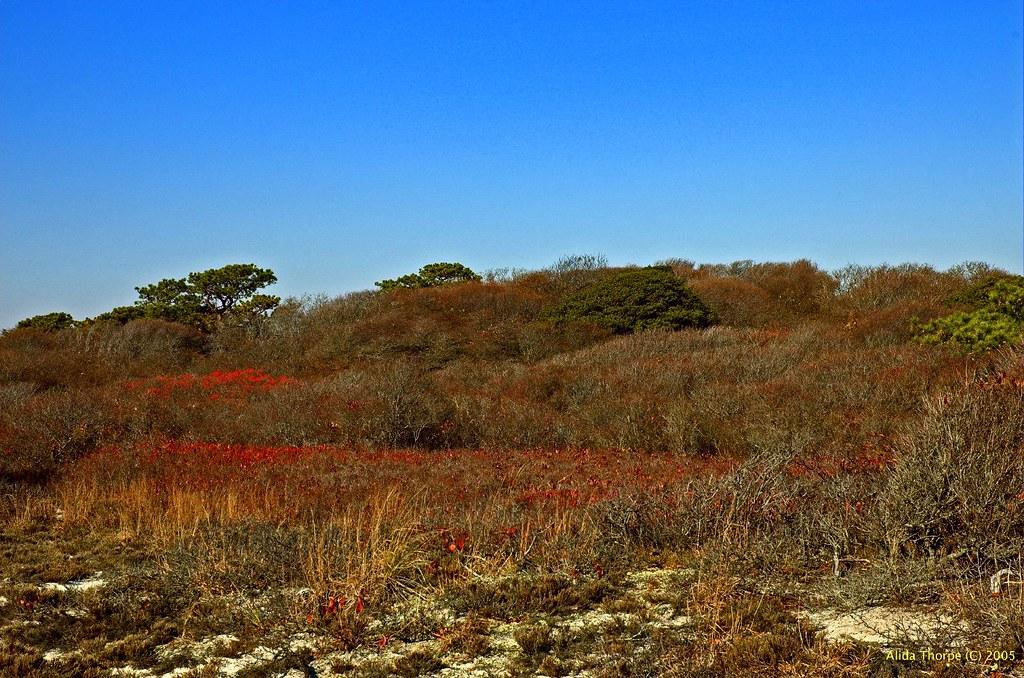 Fire Island Sand Dunes