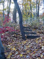 Mondo-Pond-Steps