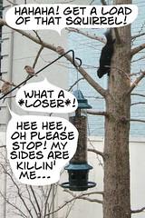 Loser Squirrel