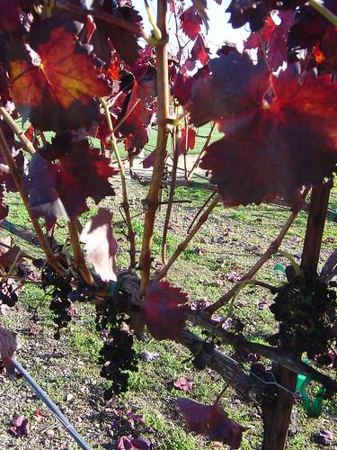 Winetasting 004