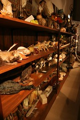 Wunderkammer (cabinet of curiosities)