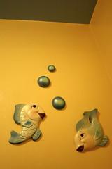 Farm Fish