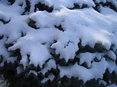 snow / neve