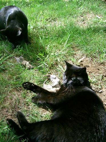 2happycats
