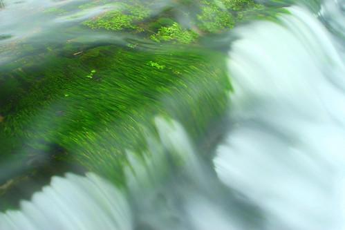 Weed underwater