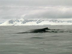 ANT2005 - Whale Watching, part 2