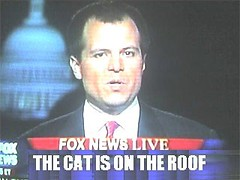 fox_news_cat_4