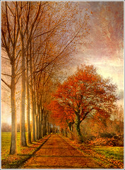Autumn Line photo by Jean-Michel Priaux