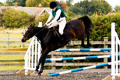Show Jumping, Patrington-8221